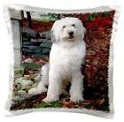 """3dRose pc_1070_1 Old English Sheepdog-Pillow Case, 16 by 16"""""""